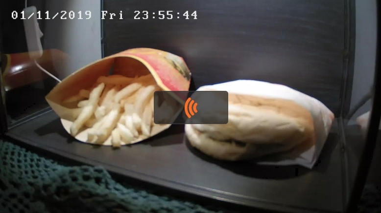 腐らないハンバーガーとポテト