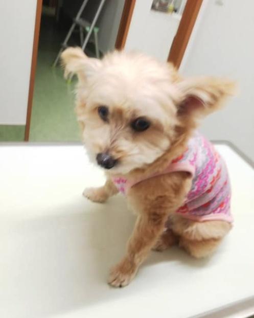 福岡市の虐待されていた犬を紫友会さんが無事保護!動画あり